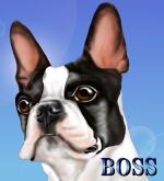 boss-3.jpg