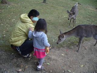1123奈良公園いーパパ