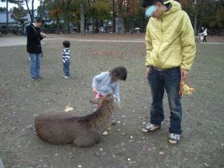 1123奈良公園いーパパ2
