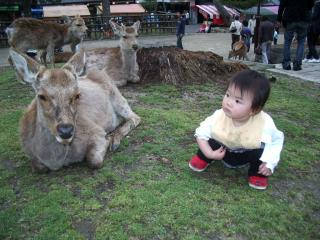 2007.5いー奈良公園