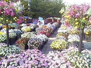 0418お花