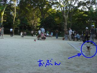 20080923d.jpg