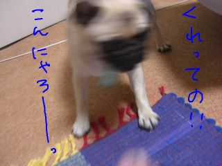 20080924e.jpg