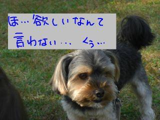 20081013e.jpg