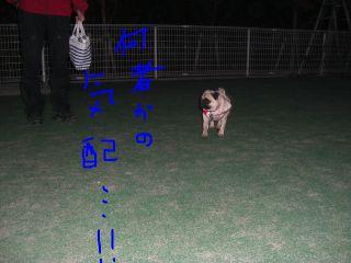 20081116aa.jpg