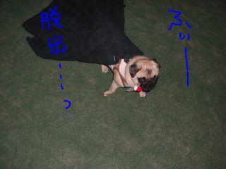 20081116m.jpg