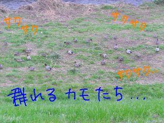 20081124c.jpg
