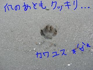 20090124e.jpg