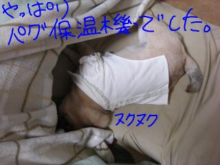 20090214q.jpg