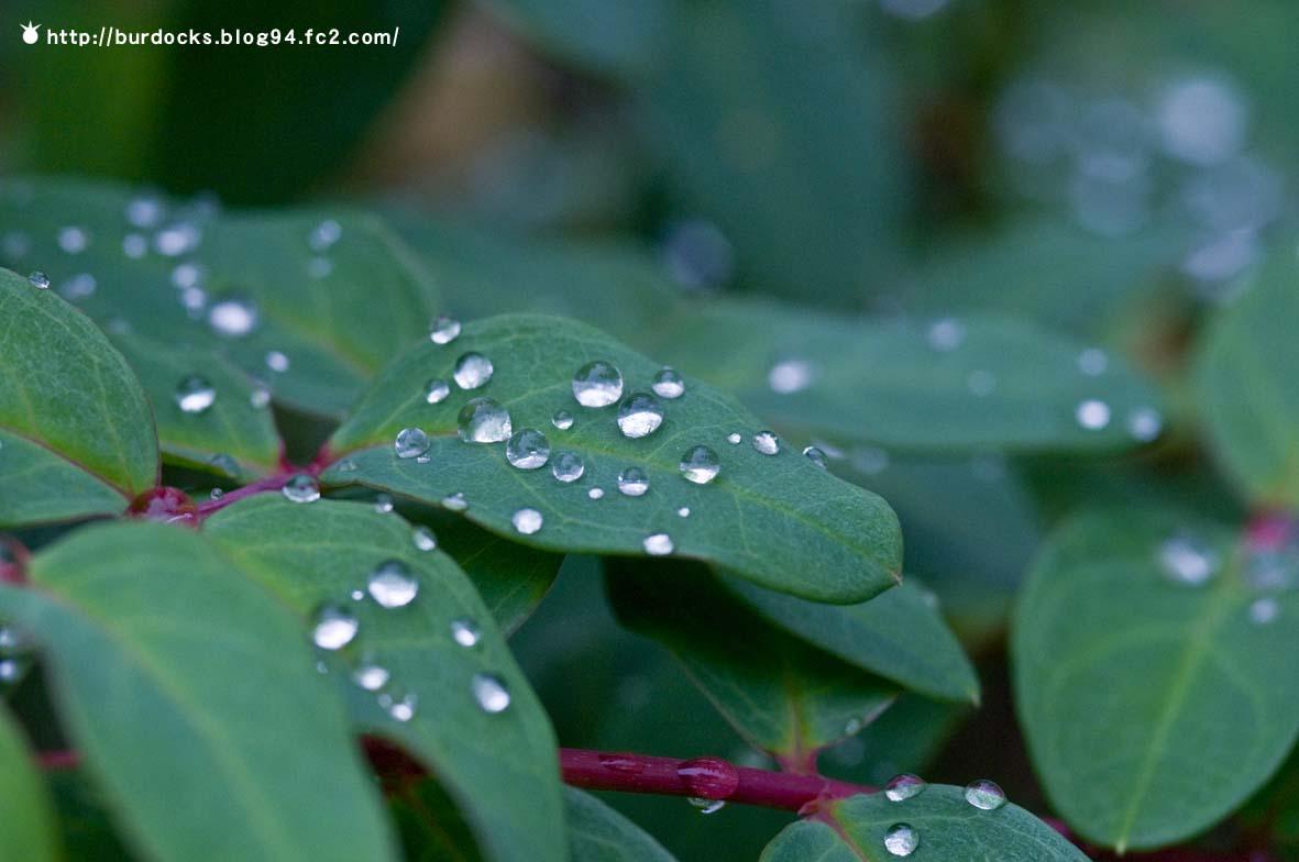 雨上がり秋