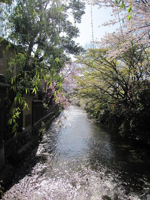 キャノン IXY DIGITAL 510ISS 実写 試写 オート 祇園白川の桜