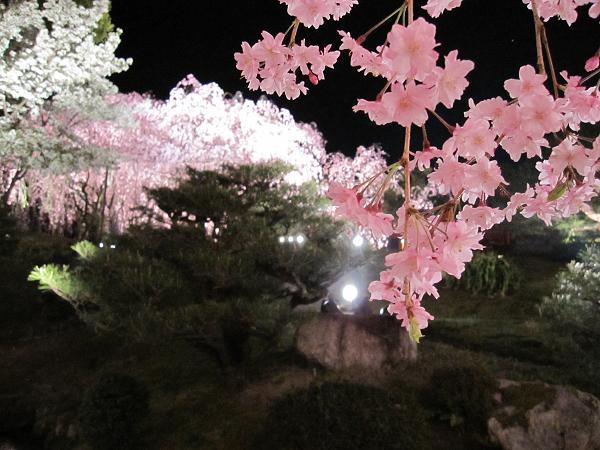 キャノン IXY DIGITAL 510IS 夜景 夜桜 画質 撮影 実写 試写  平安神宮 桜