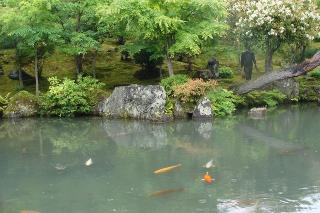 池の住民達