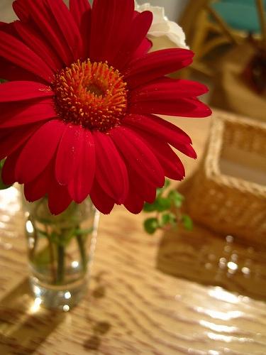 cafecafe017.jpg