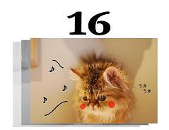 16s.jpg