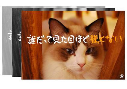 17ss_20090825201841.jpg