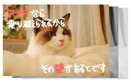 1SS_20090825201514.jpg