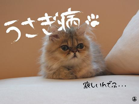ぽんち3s