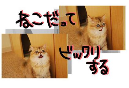 20ss_20090825202319.jpg