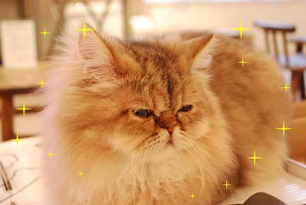 2_20090301164313.jpg