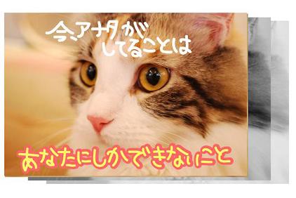 2ss_20090825201508.jpg