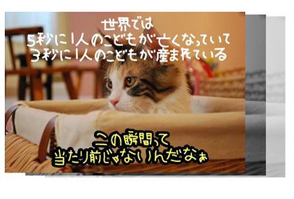 31ss_20090825202936.jpg