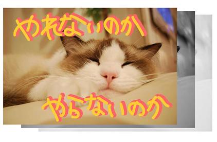 5ss_20090825201449.jpg