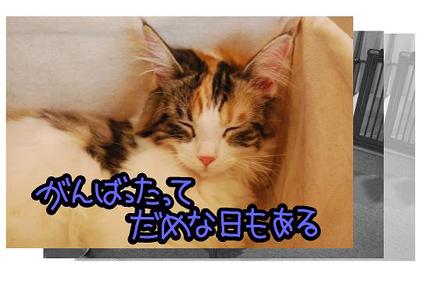 7ss_20090825201638.jpg