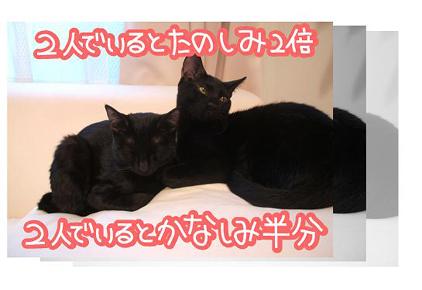 9ss_20090825201625.jpg