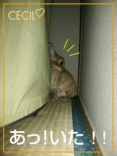 すみっこ1
