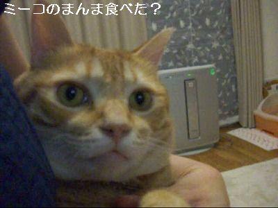 CIMG2977_0001.jpg