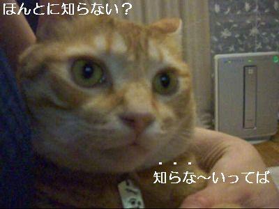 CIMG2977_0004.jpg