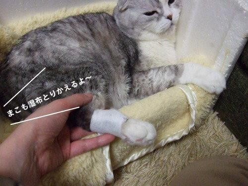 chai2012-0329-1.jpg