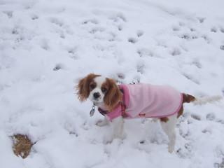 チャコ初めての雪