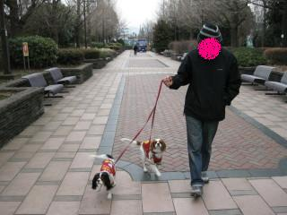 パパとチャコ&エリーは楽しそうにお散歩していました