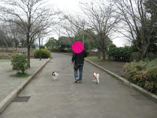 チャコ&エリーお散歩、嬉しそう