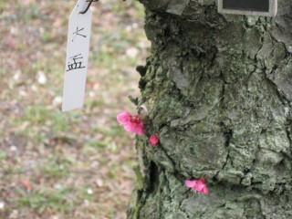 幹からお花が咲いていました