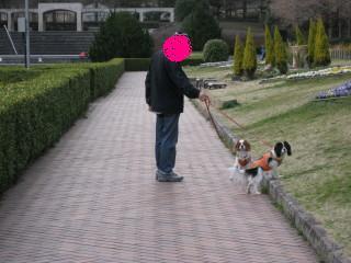 散歩中のパパとチャコ&エリー