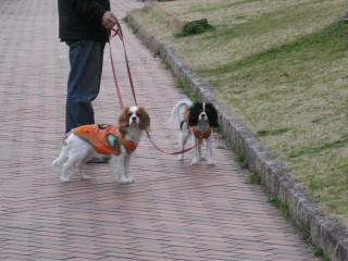 散歩中のチャコ&エリー