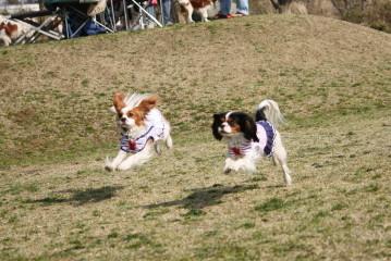 チャコ&エリー楽しそうに走ってる