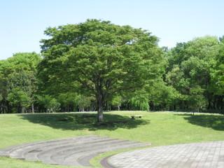 マイロちゃんの木も新緑で綺麗でした