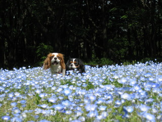 お花の中で・・・