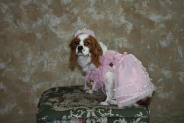 チャコのドレス姿