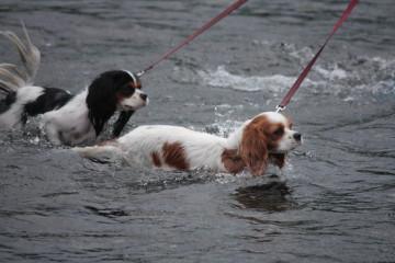 泳ぐ練習頑張ろう