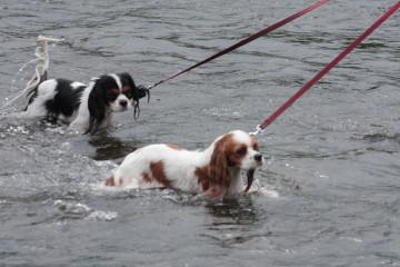 チャコ&エリーも泳げそう?