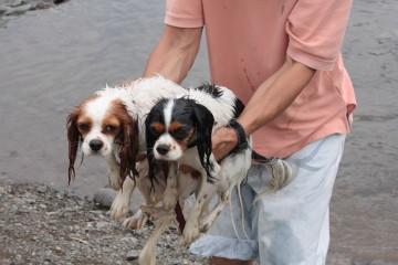 チャコ&エリー、川からあがります