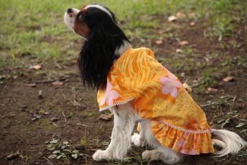 かみんちゃんのお洋服を借りたエリー