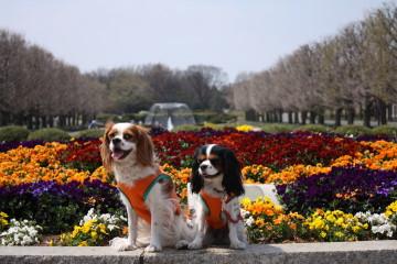 チャコ&エリー、花壇の前で・・・