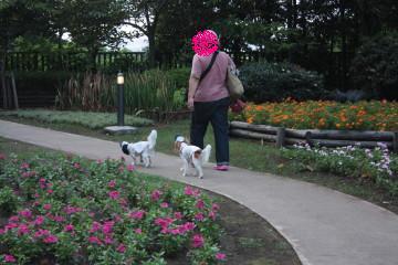 みどりの広場にはお花が綺麗に咲いています