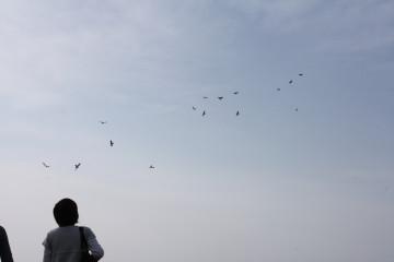 鳥だぁ~って思ったら連凧だった
